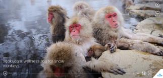 Jigokudani__wellness_spa_for_snow_monkeys
